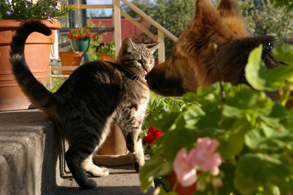 what are some common signs of aggression in dogs