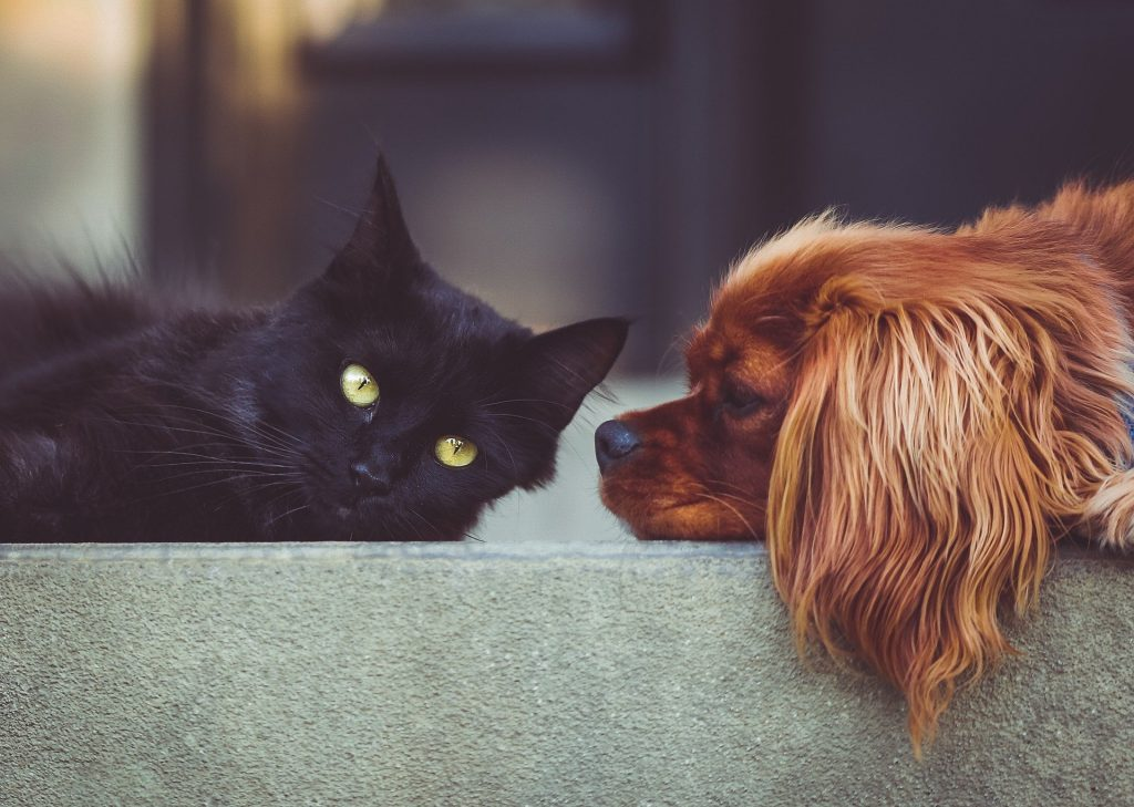 how to tell if a dog is being aggressive towards cats