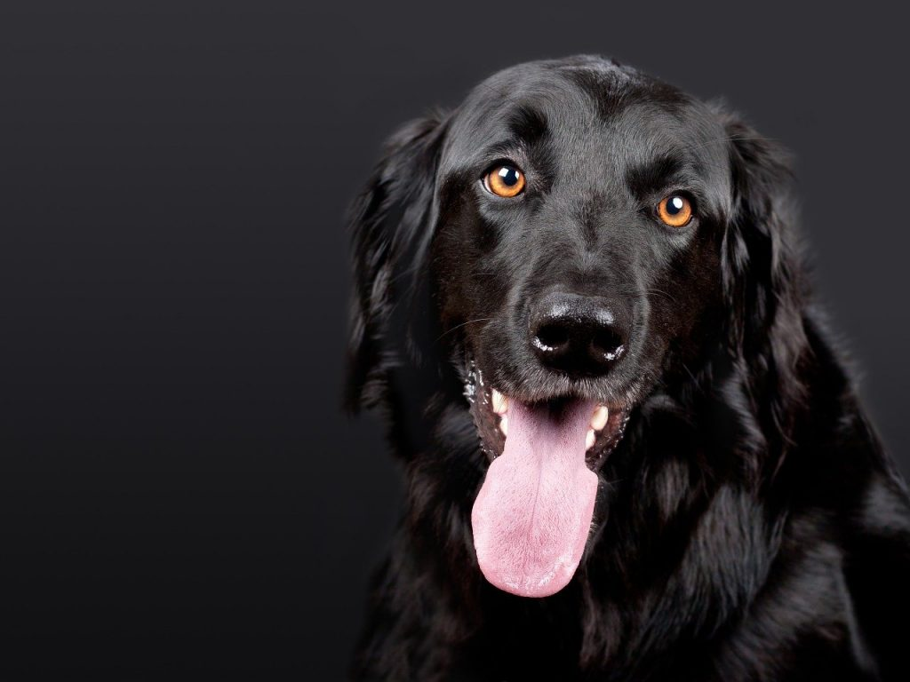 What human foods should dogs avoid