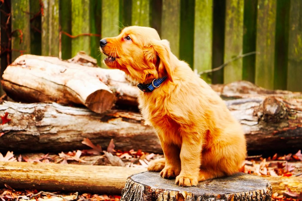 dog training to discourage howling