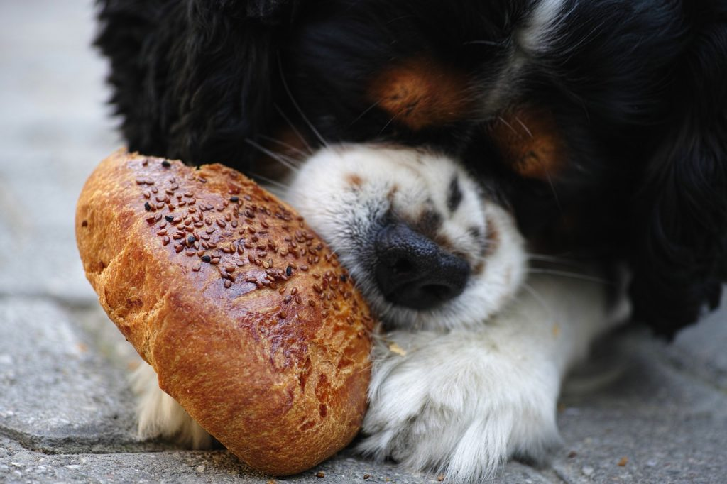 what foods should my dog eat