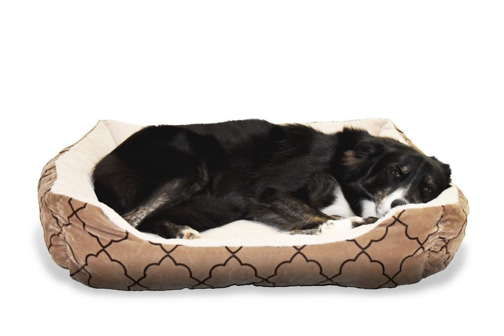 crate training bed